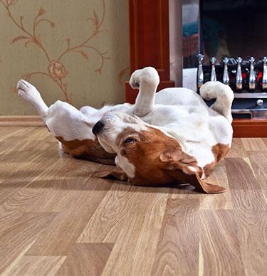 rolling dog on floor Gloucestershire